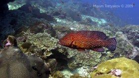 Главная страница diving on sipadan and similans